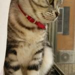 【猫 飼育 便利グッズ】ネコの首輪で陽菜ちゃんおしゃれ!だけど首輪って必要?