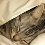 【猫 飼育 便利グッズ】ねこの冬には、これがお手軽、猫喜ぶ!