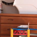 【アメショ 昼寝 日記】トミカを見た猫はどんな反応するの?