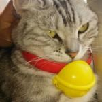 【猫 飼育 便利グッズ】ドラえもんの首輪をつけてみた