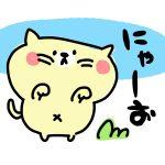 【猫 飼育 豆知識】猫の鳴き声で何を言ってるかわかる?飼い主に訴える声とは?
