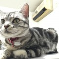 【アメショ 昼寝 日記】猫のなわばり争い