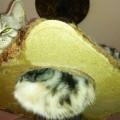 【猫 飼育 便利グッズ】ネコちゃんタワーは、ひなの聖域!猫って高いところ好き?